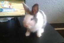 Luna / Rabbit Bunny