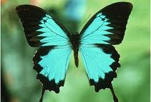 Butterflies / by Pat Price