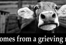 Veganismus_Flyer_Infomaterial_Englisch