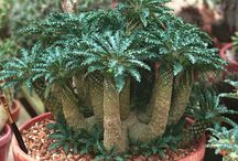 Cactus & Sukulent