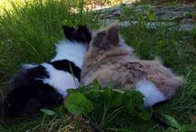 LUCKY - NELLY - LILLY <3 / Lucky is a Lionhead Rabbit and the cutest rabbit ever <3 Nelly is a Bearded Collie Girl and Lucky´s best friend <3 ...and there is also Lilly, she is a Lionhead Rabbit, too and looks like a baby cow <3 My animals were the muses for the decision to take only vegan materials as a fashion designer for my brand LYY-LUCKYNELLY. Any animal should be treated in the best way and should have a life full of love and respect without pain and fear. I love all animals!!! <3