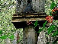 Bird Houses / by Patti La Bombard