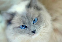 Fabulous Feline / Cats, cats, cats, and more CATS!