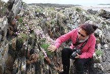 """Pedras & Flores - linguagem da natureza / """"Sempre somos capazes de dar algo mais; mesmo nas pedras germinam as flores."""" Henri Bergson"""