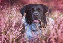 Lesenswerte Hundeblogs / Rund um den Hund