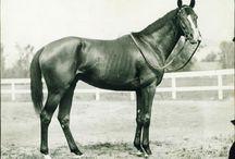 Champion Racehorses