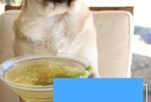 Recipes for dogs