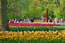Keukenhof, Holland / Tulips in springtime; Holland at its most beautiful! Read about Keukenhof at www.travelwithmarilyn.com.