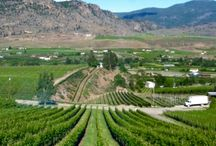 Vineyards, Wineries & Tasting Rooms / Photos of wine country view and vineyard to visit.