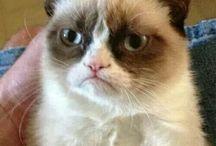 Crumpy Cat