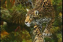 leopar resimleri