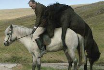 Cinema i + ... Cavalls / Cinema i + és una eina mensual per recomanar-vos pel·lícules interessants relacionades amb diferents temes. El cavall, un dels animals més nobles i lleials amb els quals té tracte l'home, és el protagonista d'aquest recull. Històries de superació, d'amistat, d'aventures i llibertat. Consulta la disponibilitat a l'ARGUS http://argus.biblioteques.gencat.cat i més informació a http://bptbloc.wordpress.com/