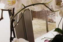 Orchids my Love <3 <3 <3