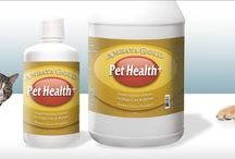 Nutritional Supplements for Pets Online - Ambaya Gold / Ambaya Gold provides a wide range of liquid supplements. To simplify the selection process we've created the AG Essentials Kit to assist with your wellness goals.