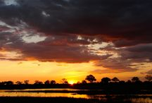Botswana / Botswana, the quintessence of African safaris