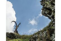 Spot Magazine Herbst #4_2015 / Vor Ort aus erster Hand – das regionale Reise- und Freizeit Magazin der Schweiz. Spot Magazine zelebriert einzigartige Orte und Menschen in der Schweiz und entdeckt dabei Altes neu und erforscht Neues aus 'Insider'-Perspektive. Wir fragen: Was passiert wann und wo, wohin lohnt es sich zu reisen, was können wir dort unternehmen und wo können wir speisen und übernachten.