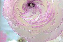bloemen ***