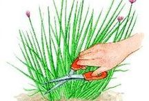 Herbe pour jardin