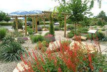 Merveilleux Desert With Altitude   Irrigation Free Landscape