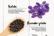 vinhos e aromas
