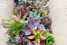 Beautiful succulent and cactus