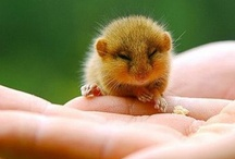 cuteness OVERLOADE ^_^
