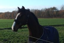 Paard Unbreakable B / Mijn toppaard!