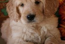Precious Pups