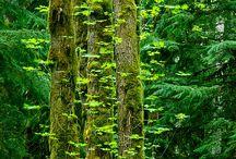 Trees / by Mitko Janeski