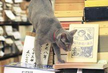本と猫 一冊目