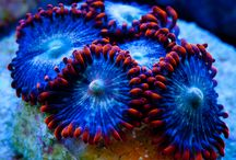Tidal Gardens / Coral photography from Tidal Gardens Aquaculture