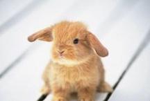 Conejos + Rosa = <3 / Mi mascota preferida + mi color fvorito