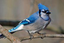 Birds In Our Backyard / by Maryann Vallone