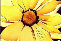 Flowers prisma photos