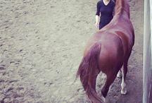 Træning af heste