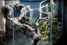 chemeleon terrarium