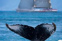 ❤ Whale of a Tail / Mammals and other creatures that live in the sea. / by jrachelle