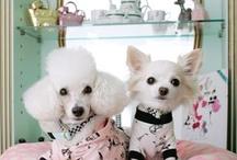 Puppys / Cute