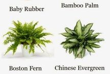 Plants to healthy life / Air enhancing