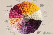 květinový vzorník