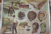 À acheter / Ancienne Grande Affiche Scolaire l'Huitre Ostréiculteurs Rossignol programme pédagogique de 1954 Vintage format 74cm x 88cm environ  papier 80/90 grammes  le recto à l'impression le verso est imprimé en pouce 29,13 x 34,64 . encadrement , scrapbooking