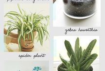 House plants and garden