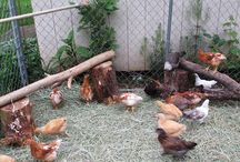 Chicken things