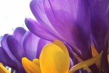 OR@NGE & purple...