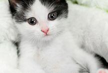 Kittens !!!