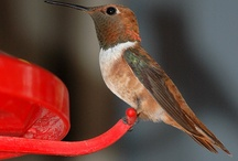 Hummingbird Gallery / by Debbie Kenney Thomas