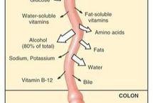 medicine nutrition