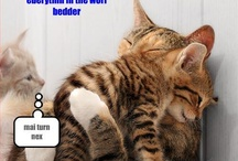 Amusment can be found in the strangest of places. / Pictures i think are funny! Like the lolcats! ♥