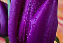 Because its purple