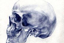 Anatomia-Scheletro